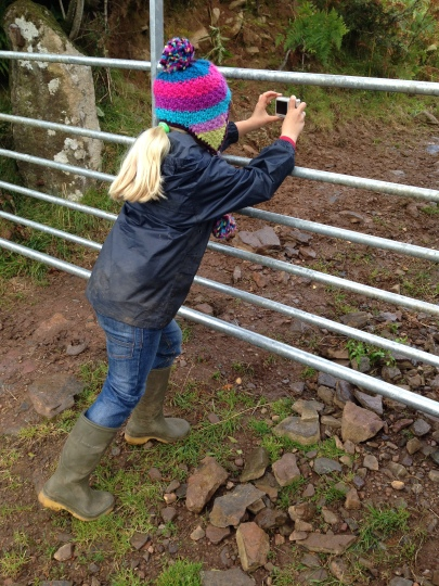 Taking a picture of the pigs