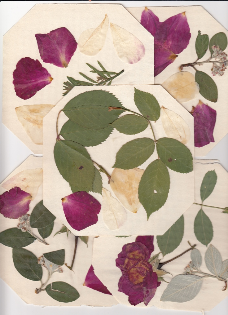 Pressed flowers multiple